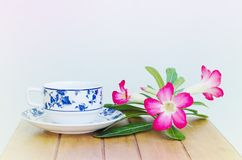 Coffe cup and Desert Rose Royalty Free Stock Photo