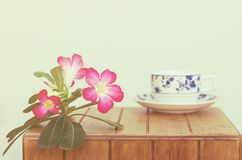 Coffe cup and Desert Rose Royalty Free Stock Images