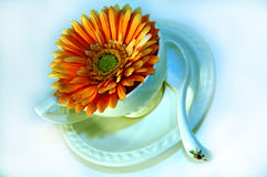 Coffe cup with flower 6 Royalty Free Stock Photography