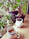 Coffe di mattina Fotografia Stock Libera da Diritti