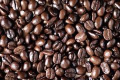 Coffe fasole Obraz Stock