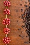 Coffe fasole i świeże jagod fasole Zdjęcia Royalty Free