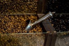 Coffe in grains stock images
