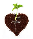 Coffe heart. Isolated. See my other works in portfolio royalty free stock image