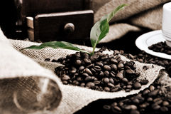 Coffe plant in granules Royalty Free Stock Photography