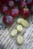 Coffe verde (coffea arabica) Fotografia Stock Libera da Diritti