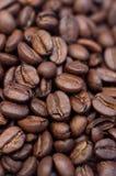 Coffea de los granos de café Fotografía de archivo