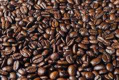 Coffebeans on Neutral Gray Background. Dark Roast Coffee. Dark Roast Coffee on neutral Background Royalty Free Stock Photos