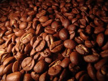 Coffee. Beans Royalty Free Stock Images