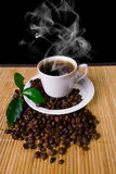 Coffee. Hot coffee cup, coffe beans and young plant royalty free stock photo