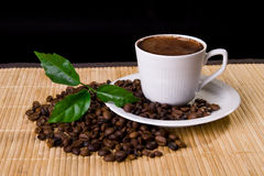Coffee. Cup, coffe beans and young plant royalty free stock photos