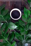 Coffee and plants royalty free stock photos