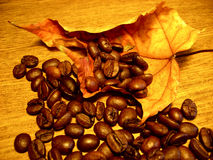 Coffee. Beans on the maple leaf Royalty Free Stock Photos
