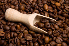 Coffee. Beans in burlap sack Stock Image