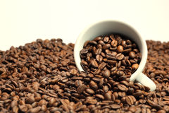 Coffee. Beans with a cup Stock Image