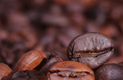 Coffee. Close up of coffe grains royalty free stock photography