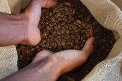 Coffee. Hand takes coffeebeans out of the bag Royalty Free Stock Photography