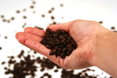 Coffee?. Hand holding coffee beans on a white background stock images