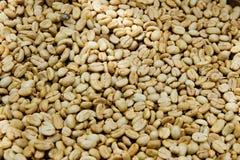 Coffee Arabica. Unroasted coffee Arabika, Indonesia, Bali Stock Photography