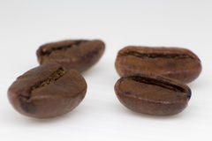 Coffee arabica Stock Images