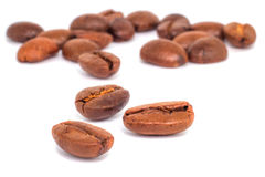 Coffee arabica on white background Stock Photography