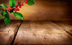 Coffee background. Real coffee plant stock photos