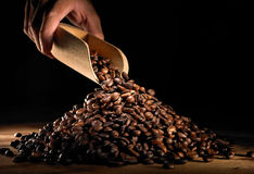 Free Coffee Bean Stock Images - 11137514