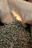Coffee bean. Unroasted coffee beans in a burlap Royalty Free Stock Image