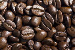Coffee bean. Texture for background Royalty Free Stock Images