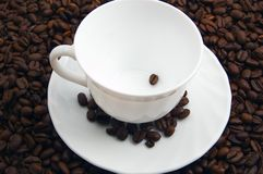 Coffee bean. In a white cup Royalty Free Stock Photos