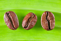 Coffee Bean. On green leaf Stock Images