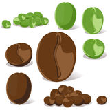 Coffee bean. On white background vector illustration