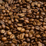 Coffee bean. royalty free stock image