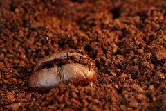 Coffee Bean. Macro of a coffee bean in roasted coffee grounds royalty free stock images