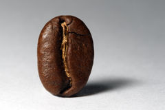 Free Coffee Bean Stock Image - 7277811