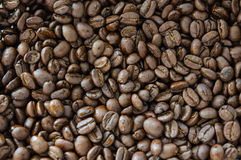 Coffee bean backgrond Stock Image