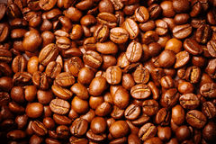 Coffee bean background stock image