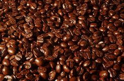 Coffee Bean Background. Coffee beans arranged into an even background royalty free stock photos