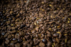 Coffee bean. Stock Photography