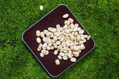 Coffee bean on black coffe powder Royalty Free Stock Photography