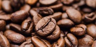 Coffee bean closeup  Royalty Free Stock Photo