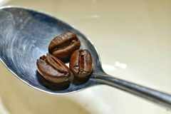 Coffee bean. S in spoon Royalty Free Stock Photography