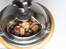 Coffee bean in coffee grinder Stock Photography