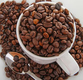 Coffee bean and cup Stock Images