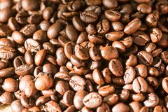 Coffee bean. With dark background Stock Image