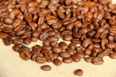 Coffee bean. Fresh roasted Arabica coffee beans Stock Images