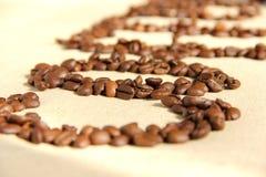 Coffee bean. Fresh roasted Arabica coffee beans Stock Image