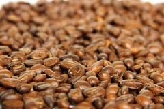 Coffee bean. Fresh roasted Arabica coffee beans Royalty Free Stock Photos