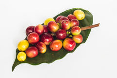 Coffee bean on green leaf Stock Photography
