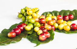 Coffee bean and green leafs Royalty Free Stock Images